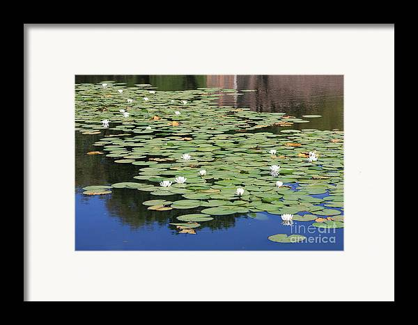 Water Framed Print featuring the photograph Water Lily Pond by Carol Groenen