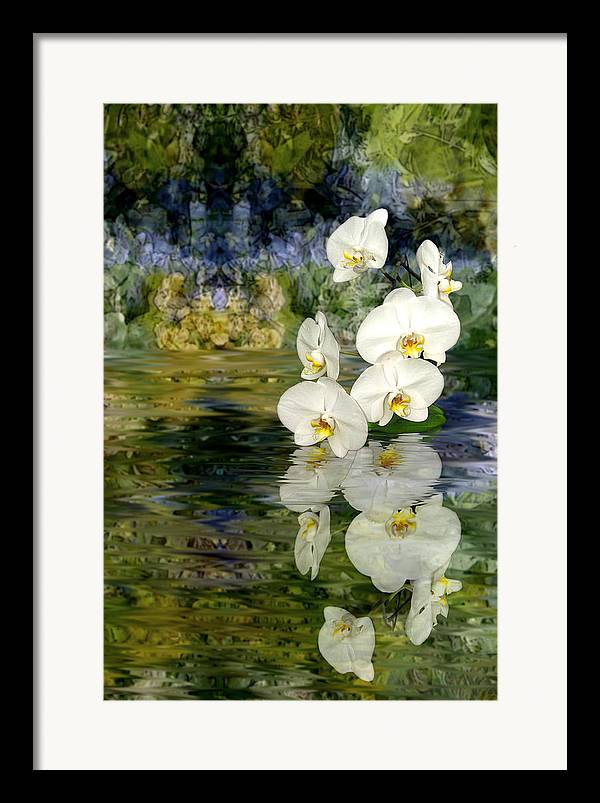 Orchid Framed Print featuring the photograph Water Orchid by Tom Romeo
