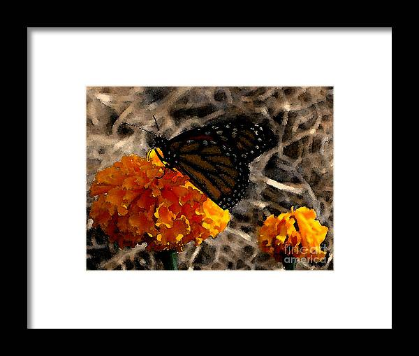 Monarch Framed Print featuring the photograph Watercolor Monarch by PJ Cloud