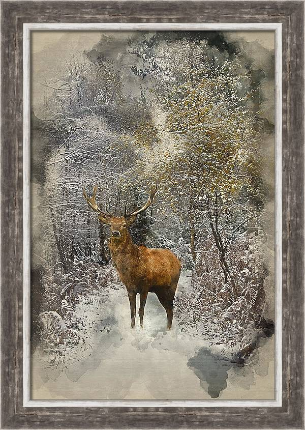 Watercolour painting of Beautiful red deer stag in snow covered  by Matthew Gibson