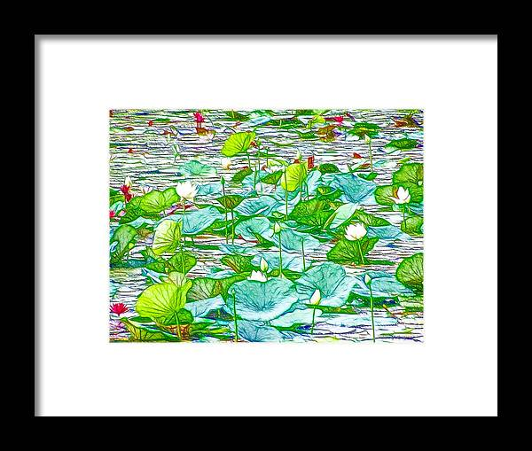 Pink Lotus Flower Framed Print featuring the painting Waterlily Blossoms On The Protected Forest Lake by Jeelan Clark
