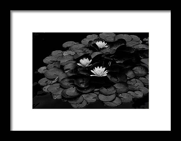 Three Framed Print featuring the photograph Waterlily by Wilma Birdwell