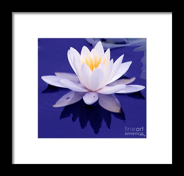 Waterlily Framed Print featuring the photograph Waterlily Wonder by S Cyr