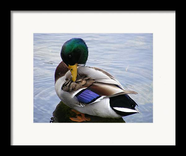 Wildlife Framed Print featuring the photograph Waters Edge by Doug Mills