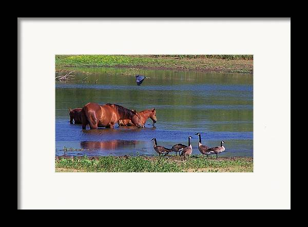 Horses Framed Print featuring the photograph We Are All Friends Here. by Lilly King