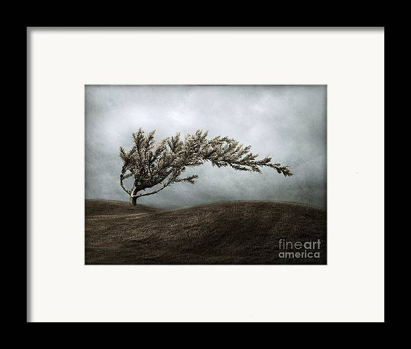 Bend Framed Print featuring the photograph We Break And We Bend And We Turn Ourselves Inside Out by Dana DiPasquale