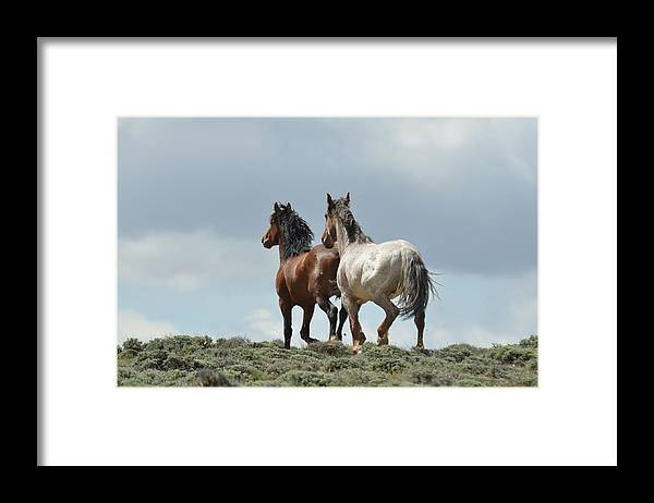 Wild Horses Framed Print featuring the photograph We Will Be Over the Hill in a Few Seconds by Frank Madia