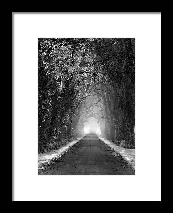 Weary Road Tree Tunnel 2 Black And White Framed Print By Peter Herman