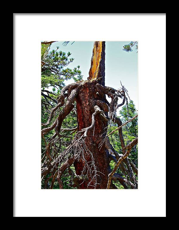 Tree Framed Print featuring the photograph Weather Beaten by Diana Hatcher