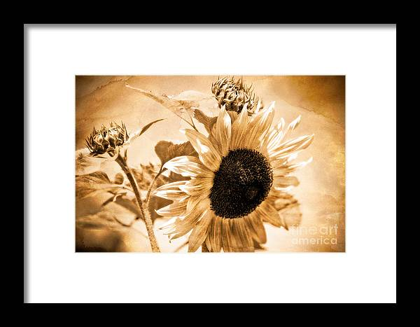 Aged Framed Print featuring the photograph Weathered Beauty by Venetta Archer