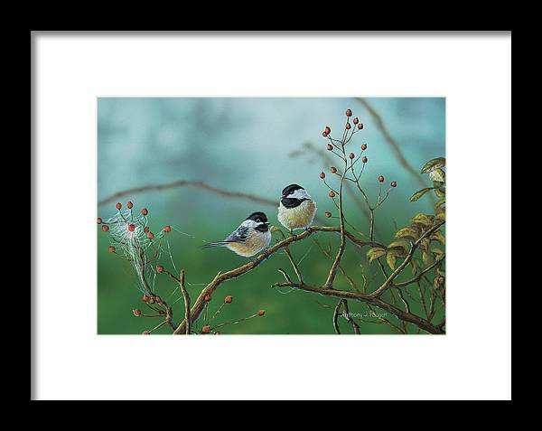 Chickadees Framed Print featuring the painting Web Chickadees by Anthony J Padgett