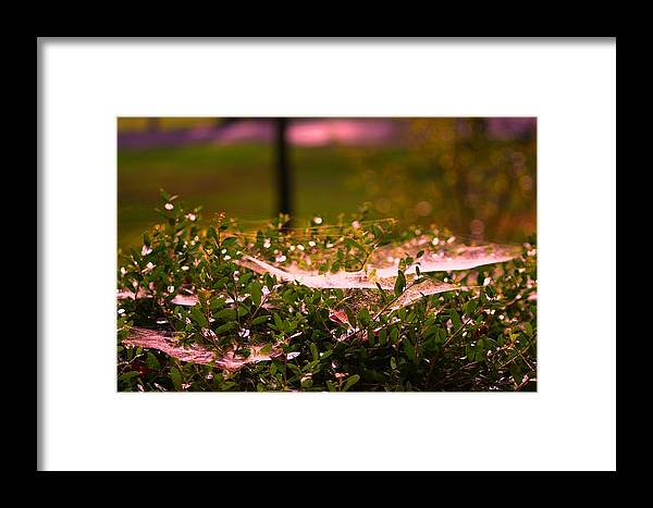 Spider Web Framed Print featuring the photograph Webs by Lisa Johnston