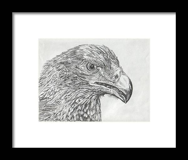 Eagle Framed Print featuring the drawing Wedgetail Eagle by Leonie Bell