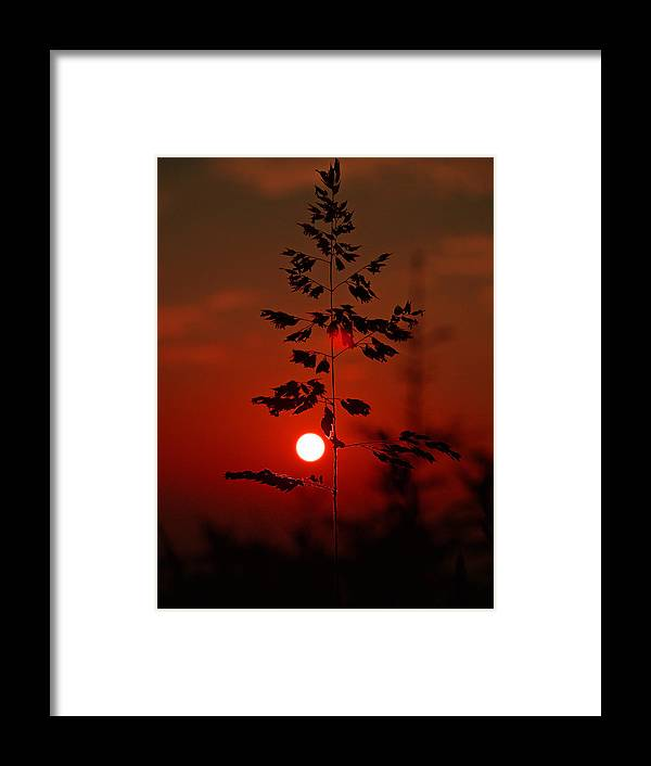 Sunset Framed Print featuring the photograph Weed by Itai Minovitz