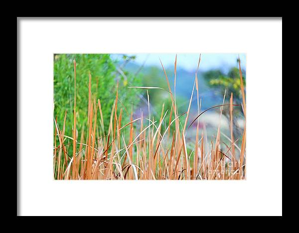 Framed Print featuring the photograph Weeds 033 by Jeff Downs