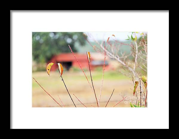 Framed Print featuring the photograph Weeds 037 by Jeff Downs