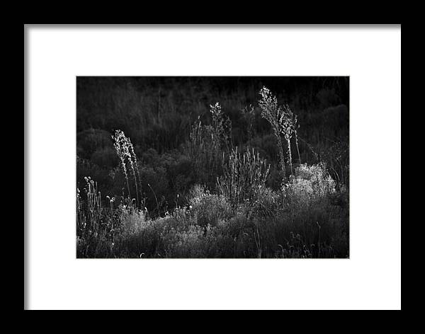 Weeds Framed Print featuring the photograph Weeds 5 by Catherine Sobredo