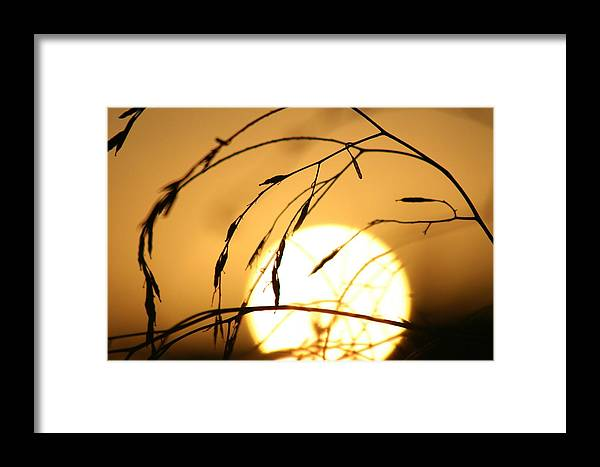 Sun Framed Print featuring the photograph Weeds In The Sun by Kerry Reed
