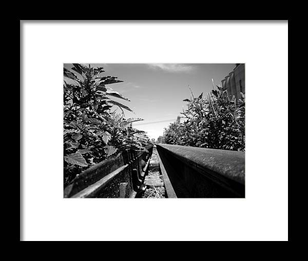 Landscape Framed Print featuring the photograph Weeds by R Lewis