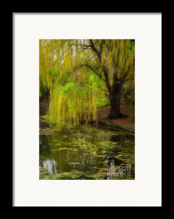 Botanica Framed Print featuring the photograph Weeping Pond by Fred Lassmann