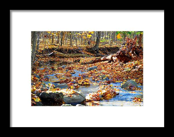 Nature Framed Print featuring the photograph Weeping Rock Brook by Peter McIntosh