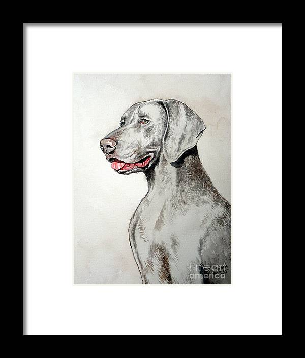 Weimaraner Framed Print featuring the painting Weimaraner by Christopher Shellhammer
