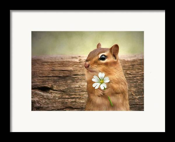 Chippy Framed Print featuring the photograph Welcome Spring by Lori Deiter