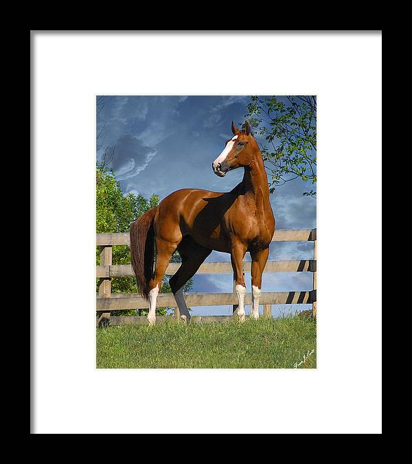 Horses Framed Print featuring the photograph Welt Adel by Fran J Scott