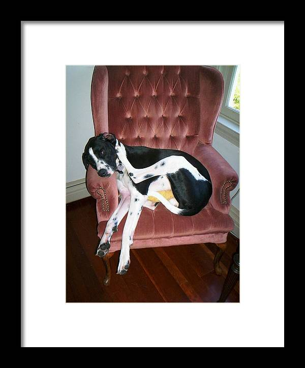 Great Dane Wing Chair Dog Framed Print featuring the photograph We're Going To Need A Bigger Boat by Marybeth Friel-Patton