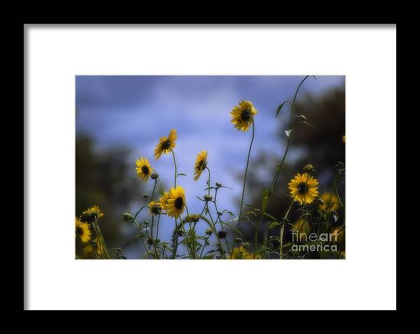 New Mexico Framed Print featuring the photograph Were Not In Kansas Anymore by Fred Lassmann