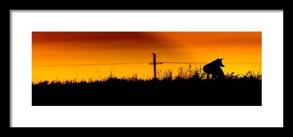 West Framed Print featuring the photograph West Texas Fox by Paul Gibson
