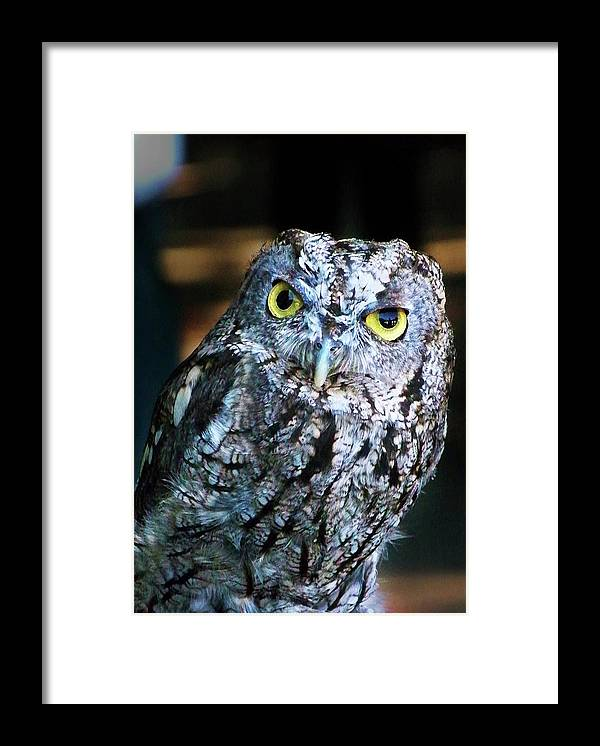 Owl Framed Print featuring the photograph Western Screech Owl by Anthony Jones