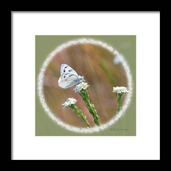 Butterfly Framed Print featuring the digital art Western White Butterfly by Kae Cheatham