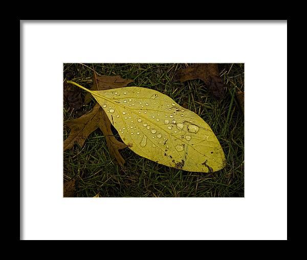 Leaf Framed Print featuring the photograph Wet Fallen Leaf by Robert Ullmann