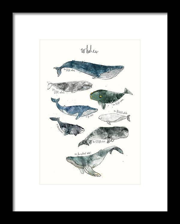 Whales Framed Print featuring the painting Whales by Amy Hamilton