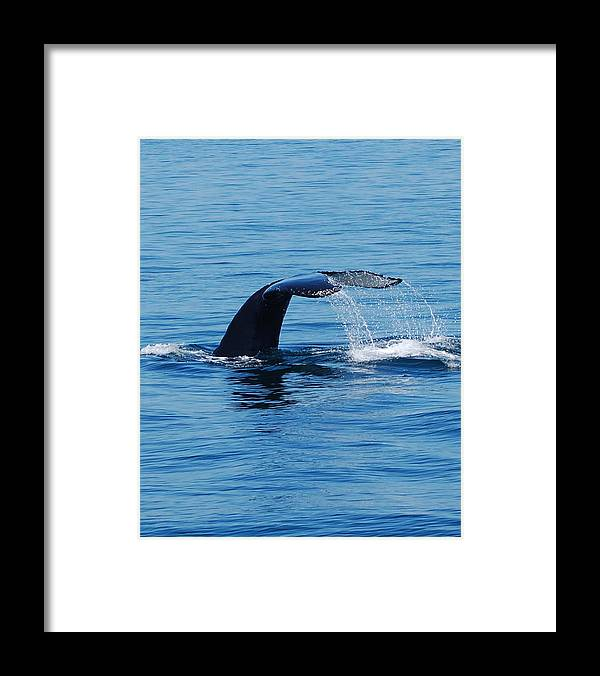 Whales Framed Print featuring the photograph Whales Tale by Lisa Kane