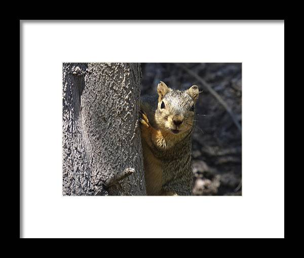 California Ground Squirrel Framed Print featuring the photograph What Do You Want by Natalya Shvetsky