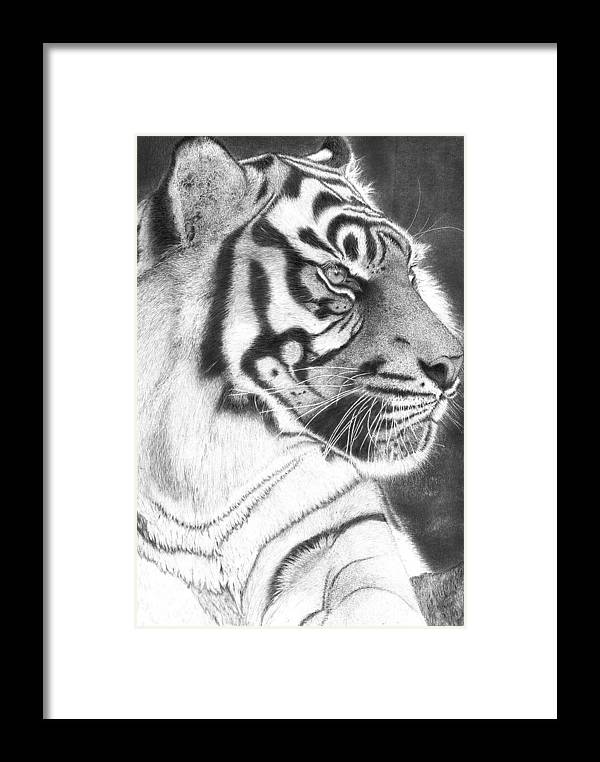 Tiger Framed Print featuring the drawing Whats New Pussycat by Alexandra Riley