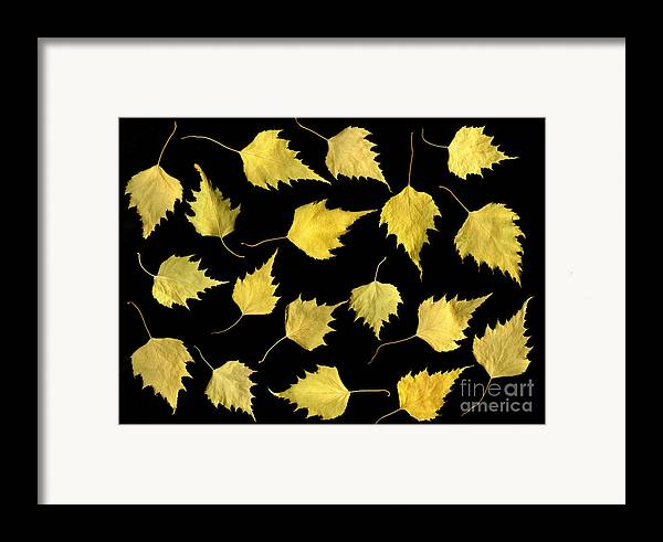 Scanography Framed Print featuring the photograph When Leaves Grow Old by Christian Slanec