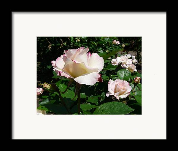 Flower Framed Print featuring the photograph When Springtime Comes Calling by Kendall Eutemey