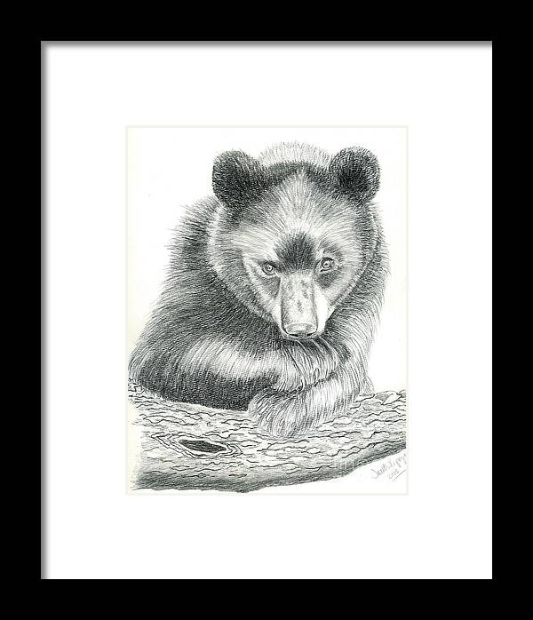 Black Bear Framed Print featuring the drawing Where by Joette Snyder