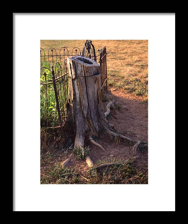 Framed Print featuring the photograph Where The Cows Can't Reach by Curtis J Neeley Jr