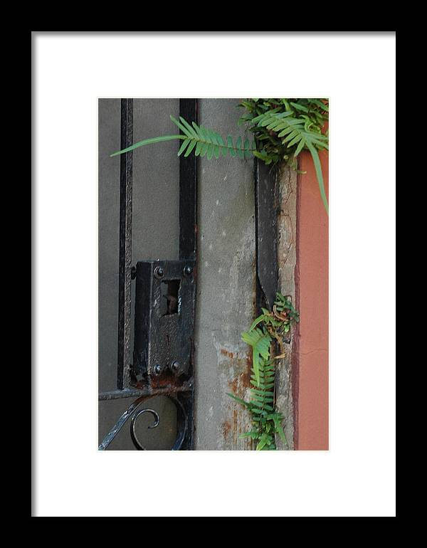 Abstract Framed Print featuring the photograph Where The Fern Grows by Lori Mellen-Pagliaro