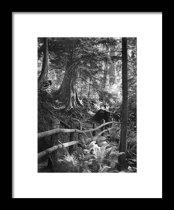 Whidbey Island Framed Print featuring the photograph Whidbey Island Trail Head by Jim Furrer