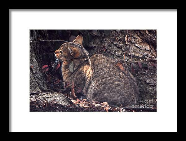 Cats Framed Print featuring the photograph While He Waits by Caleb Bynum