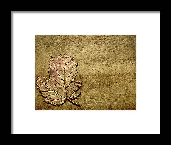 Autumn Framed Print featuring the photograph ...while You Fall Apart by Dana DiPasquale