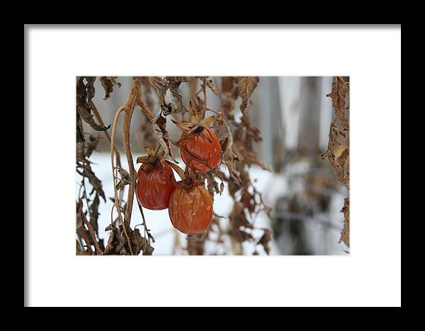 Winter Framed Print featuring the photograph Whimsical Winter by Allison Nance