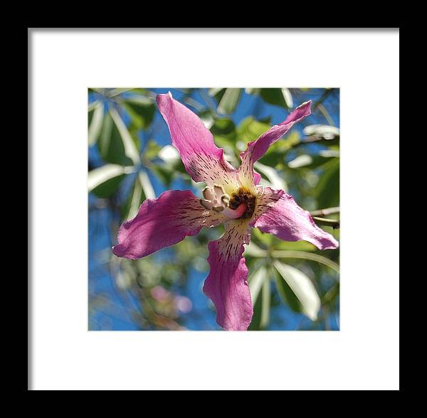 Whirl Framed Print featuring the photograph Whirligig by Jean Booth