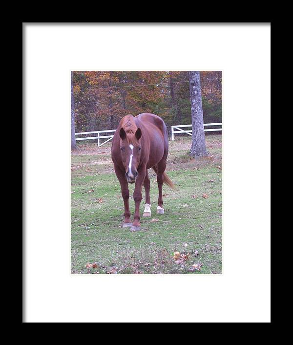 Horse Framed Print featuring the photograph Whiskey by Kristen Hurley