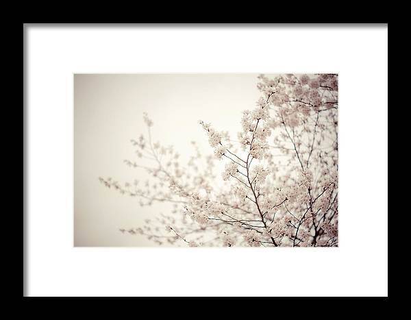 Spring Framed Print featuring the photograph Whisper - Spring Blossoms - Central Park by Vivienne Gucwa